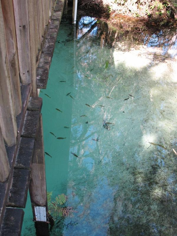large boil below the observation bridge fern hammock springs fl   tinycamper u0027s blog  rh   tinycamper wordpress