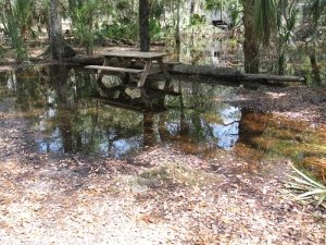 Hillsborough River flooded campsite