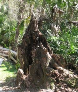 Intriguing old stump