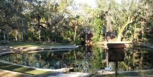 Juniper Springs Pool