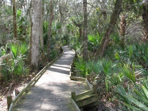 Juniper Springs Trail