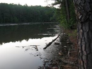 Tennessee flood trash in Georgia lake