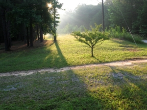 misty morning sun in my yard