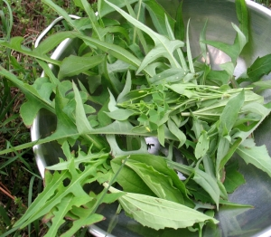wild salad greens