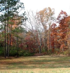 late fall color