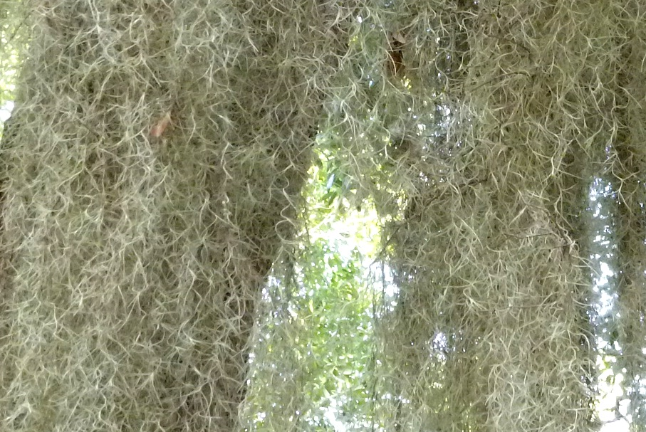 spanish moss | Tinycamper's Blog