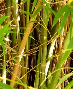 Closeup of bamboo thicket