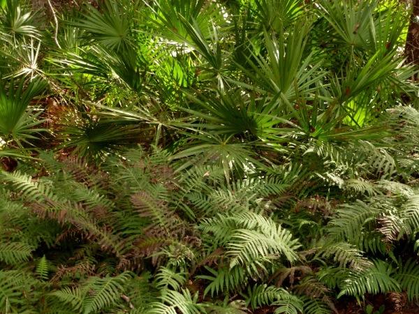 Palmettos and ferns
