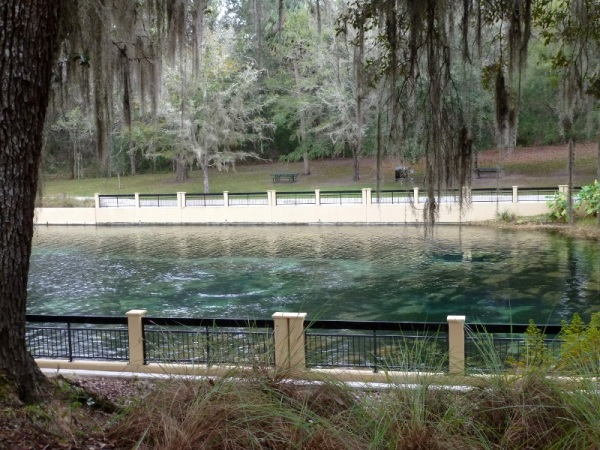 The swimming area at Salt Springs.  You can see where the water springs up from the vents in the rocks.