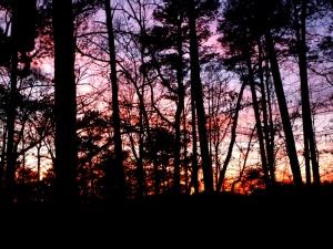 The sunset tonight