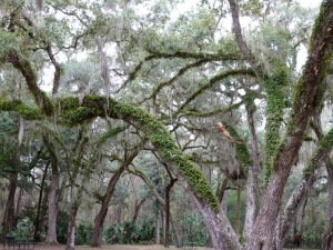 Vegetation-covered tree around spring area