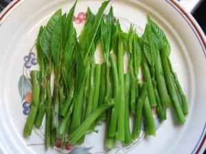 Poke salad shoots