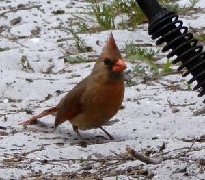 Cute little bird hopping around our fire pit.