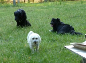 Cookie, Sunny and Sheba