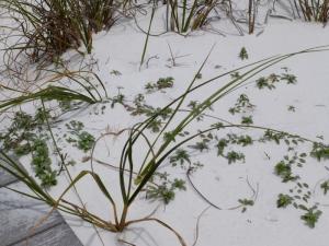 Rugged dune life