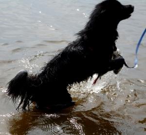 Sheba at the boat launch