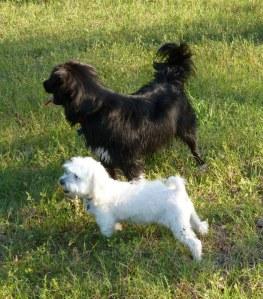 Sunny and Sheba