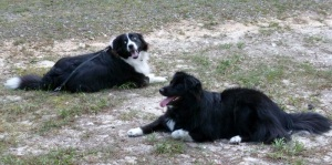 Another shot of Chase and Sheba