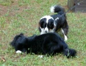 Chase and Sheba