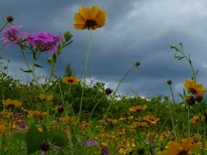 Roadside flowers before the storm