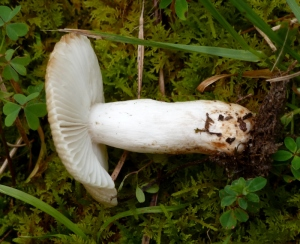 Another shot of the unidentified mushroom