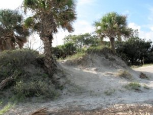 The dunes at Hunting Island
