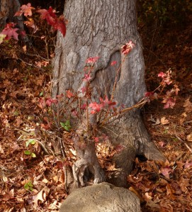 tree trunk decorated for fall