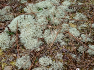 Lichen on hill