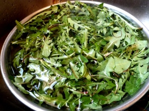 Washing dandelion greens
