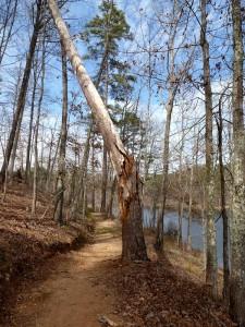 trail hazard