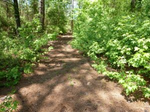 The trail is carpeted with pine needles.