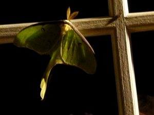A huge luna moth on our back door the night before we left.