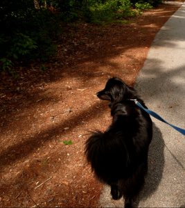 Sheba exploring