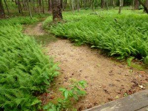 Bracken fern.  This area felt almost primeval.