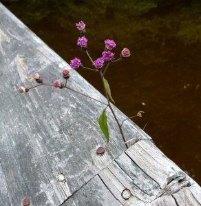Flowers blooming from a crack in the bridge rail.