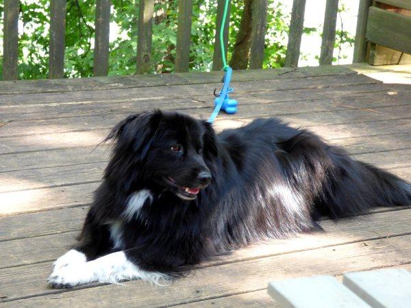 Sheba, a sweet, happy camper