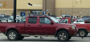 I was sitting in the truck while Ron went into Walmart for a few items.  I watched the crows gather on the only two red vehicles in that area of the parking lot.  It struck me odd that they preferred red to all the other colors.