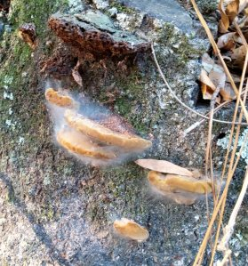 Some kind of fungus.  At first I thought it was leaves caught up in a spider web.  But it may be a feature of the mushroom.