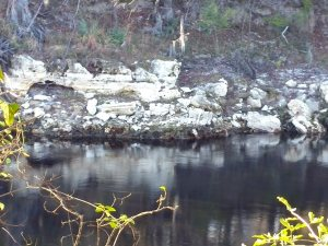 Limestone outcroppings along the river bank.  I think that acid rain eats away the limestone base causing Florida's numerous sinkholes.
