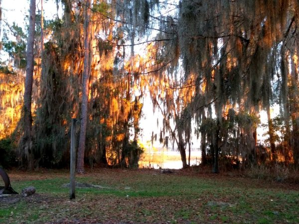 "Sunset reflecting off the Spanish moss in our ""front yard."""