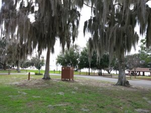 Lake Apopka, the boat launch and more picnic areas are across the street from us.
