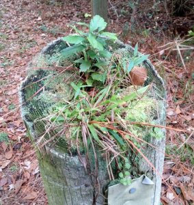 Natural planter