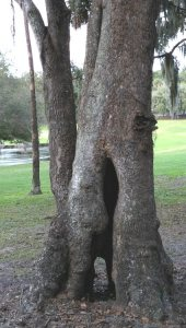 A see-through tree