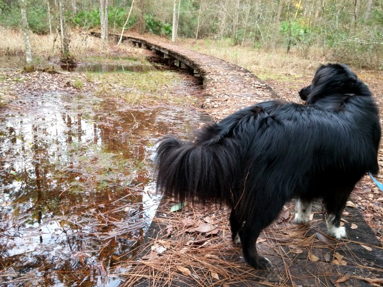 Sheba telling me she wanted to play in the water.
