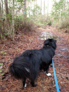 Mud puddles ahead