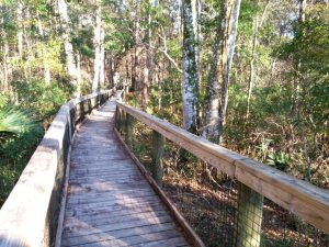 Walkway over the swamp to the river observation deck