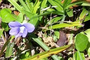 violet3