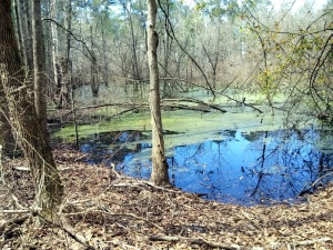 We did discover anotther swamp at our last campground.  Fortunate the area was hilly and the campground wasn't swampy at all.