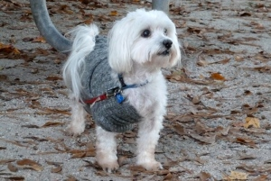 My little ragamuffin buddy coming out of his sweater at White Tail Ridge.